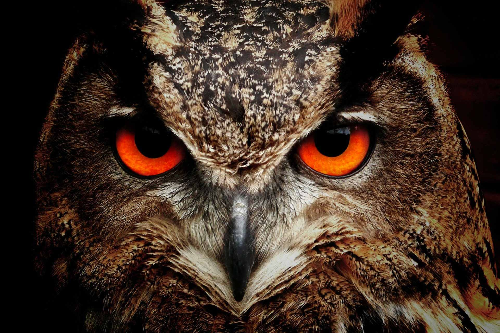 angry owl - Freedom of Speech