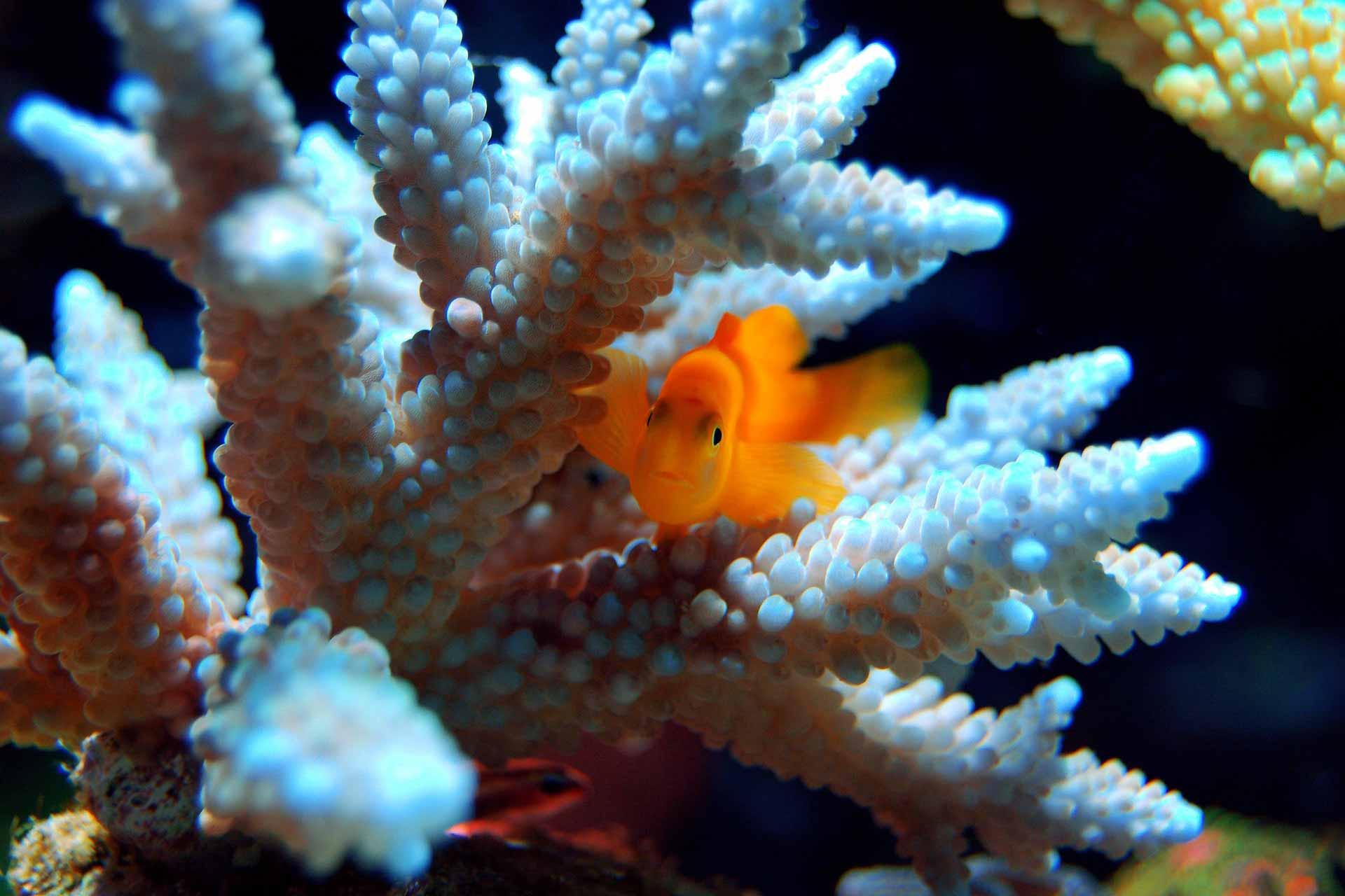 coral ocean sea fish