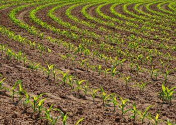 agriculture field farm
