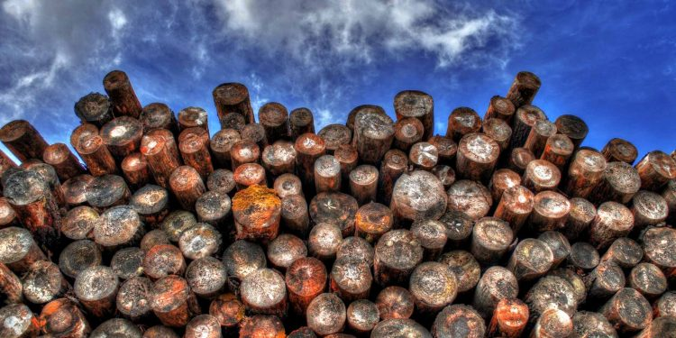 Forest timber logging