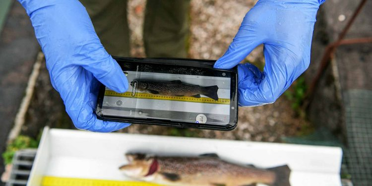 A member of the Idrolife team working in the outside pools of the fish hatchery