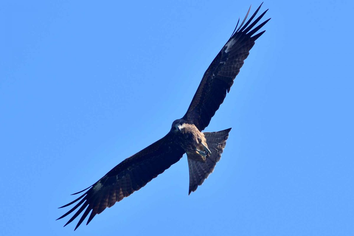 eagle bird in nature