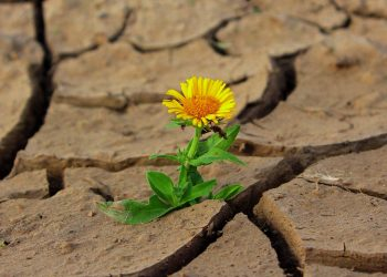 flower in dry ground drought